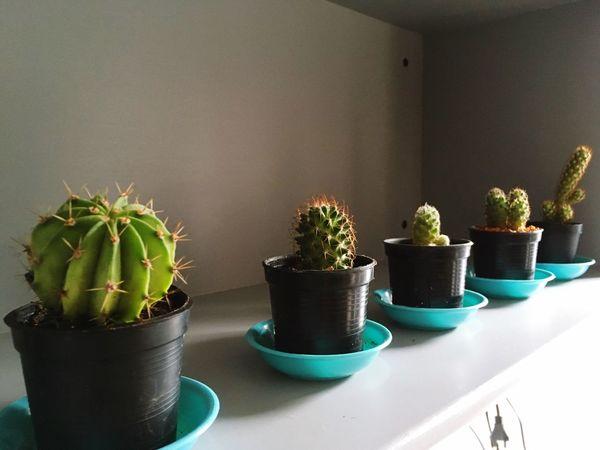 Plant Potted Plant Nature