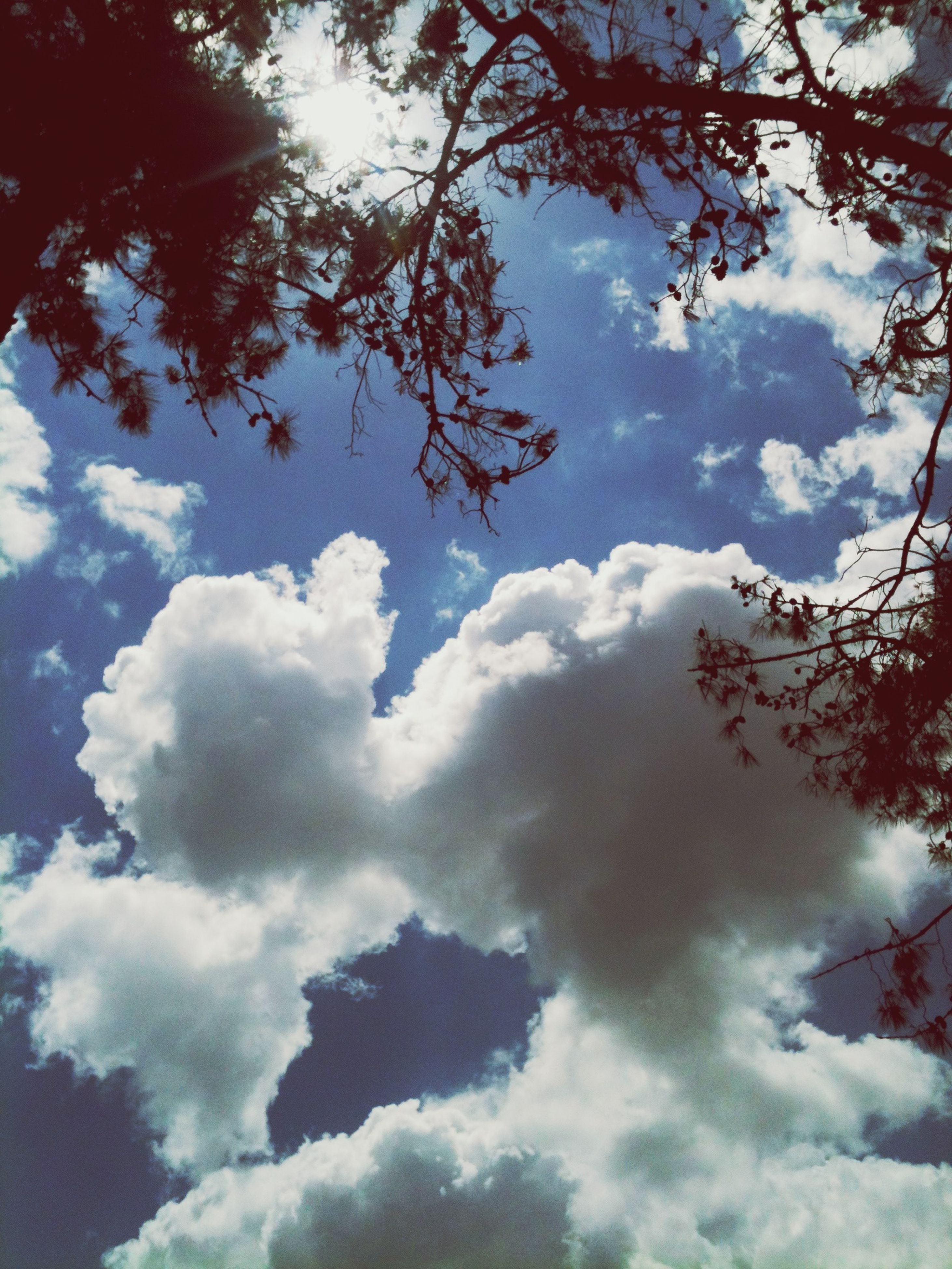 tree, low angle view, sky, beauty in nature, cloud - sky, tranquility, branch, nature, scenics, tranquil scene, growth, cloudy, cloud, sunlight, outdoors, day, no people, idyllic, sunbeam, weather