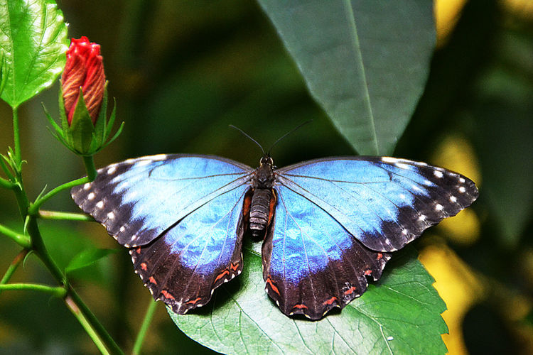 Animal Antenna Animal Markings Animal Themes Animal Wing Black Color Butterfly Butterfly - Insect Butterfly Collection Close-up Day Green Color In A Far Far Away Galaxy Insect Morph Natural Pattern Nature No People Plant