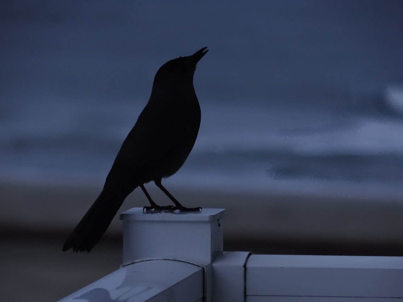 Animal Themes Animal Wildlife Animals In The Wild Bird Blackbird Day Dusk Dusk Sky Nature No People One Animal Outdoors Perching Railing Raven - Bird Shoreline Silhouette Sky Waterfront
