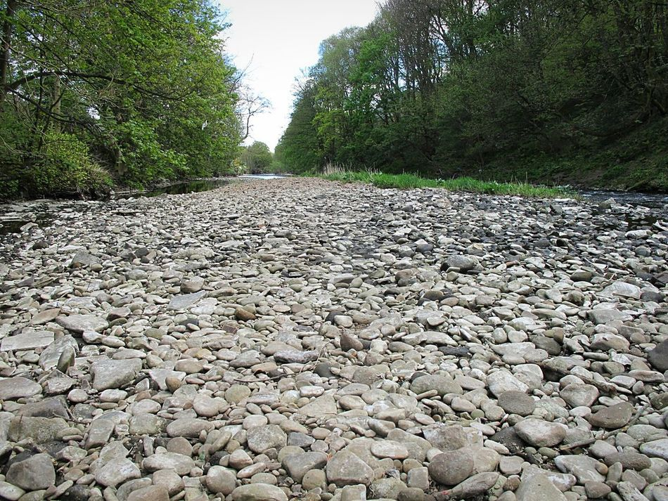 Pebble No People Outdoors Nature Water Tranquil Scene Landscape River Collection Springtime Beauty In Nature Pebble Beach Low Angle View