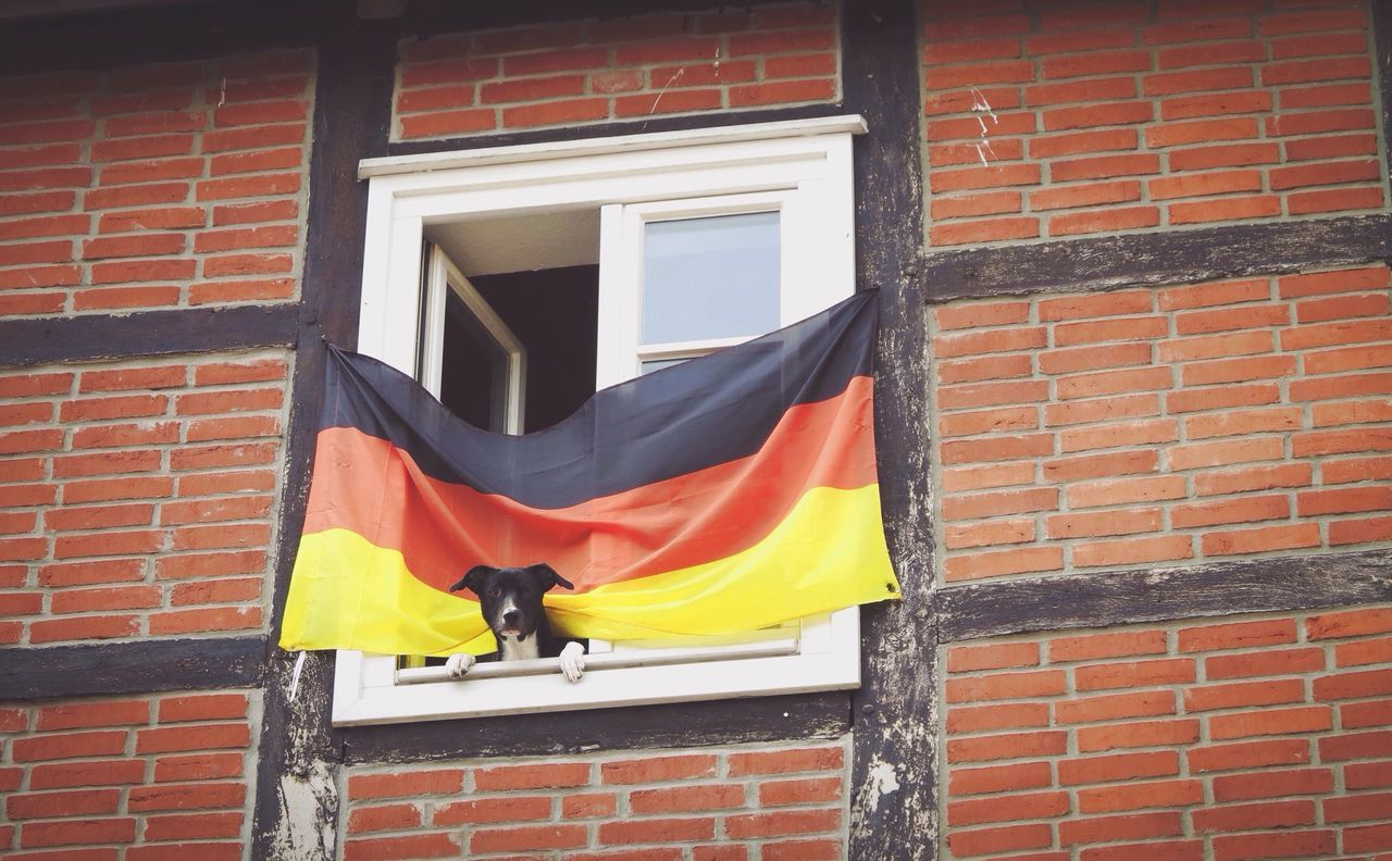 Dog Flag EyeEm Best Shots Pet The Moment - 2015 EyeEm Awards