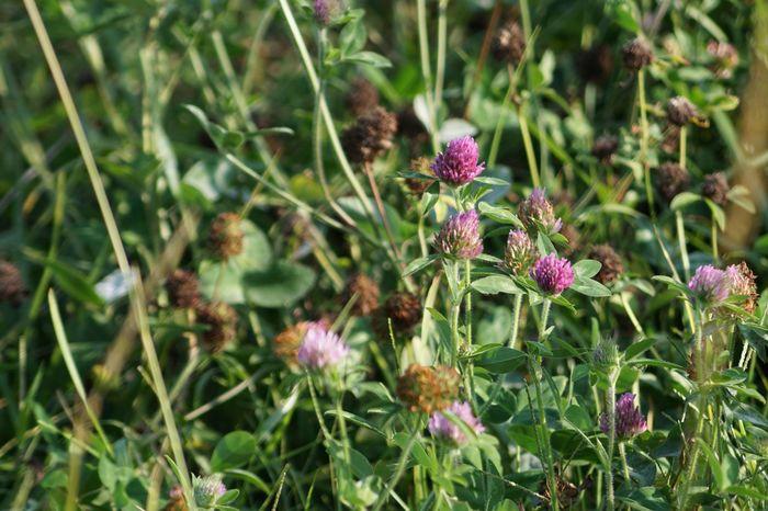 Flowers in a field Nature Wildflowers Purple