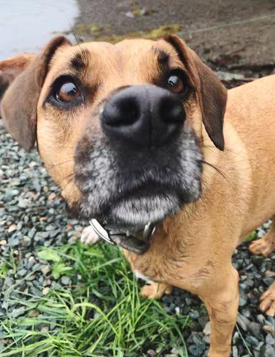 Buddy 💕 Lakeshore Close-up Mut Pet Cute Dog Pets Domestic Animals Animal Themes One Animal Mammal Portrait Outdoors Be. Ready. EyeEmNewHere EyeEmNewHere Be. Ready.