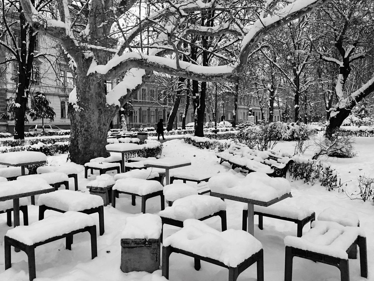 Tree Chair Snow Cold Temperature Winter Nature Table Outdoors No People Day