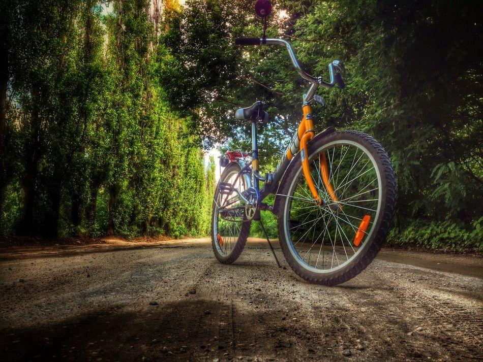 Voronezh Bike On The Road Walking Around