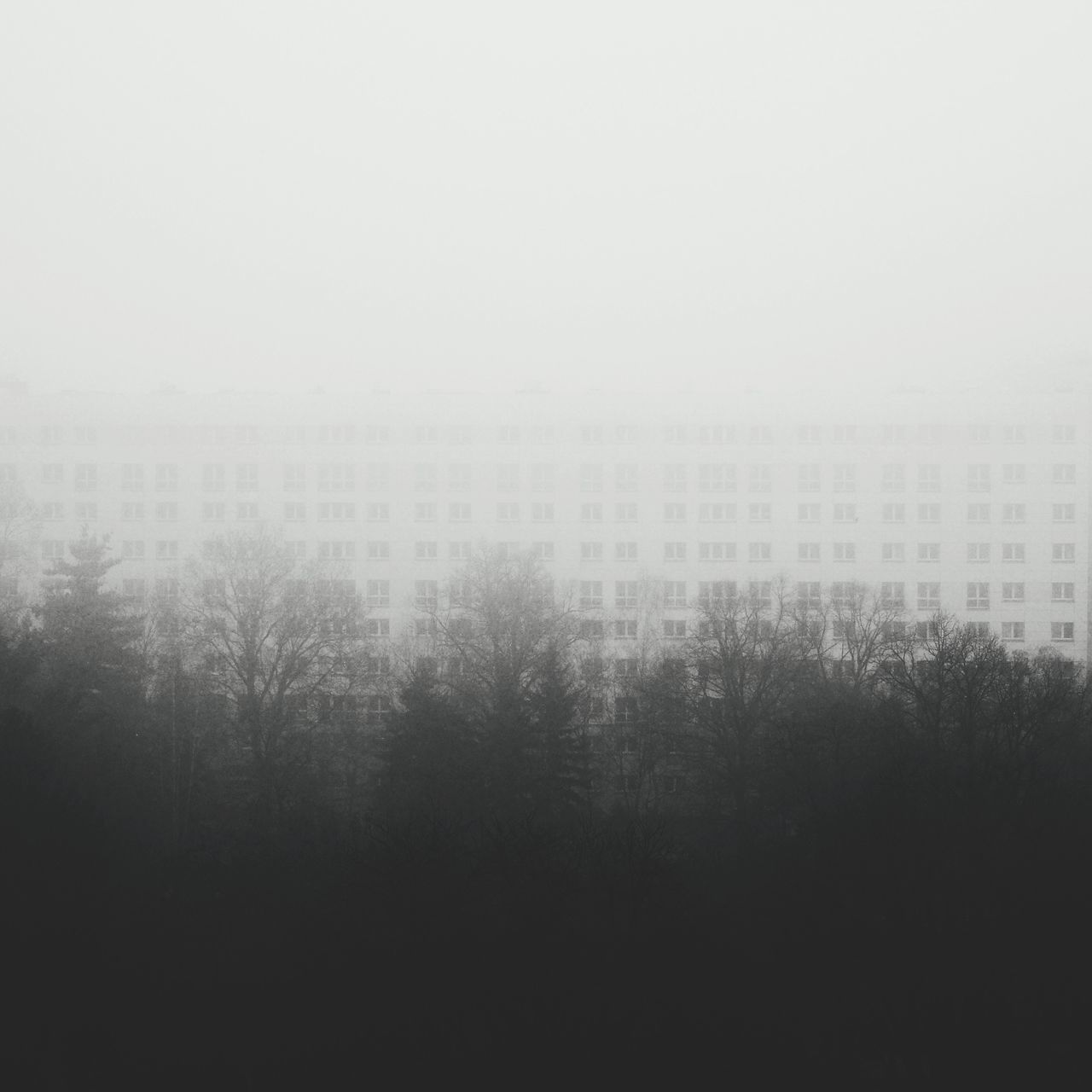 Fog Mist Tree Foggy Morning Nature Architecture Negative Space