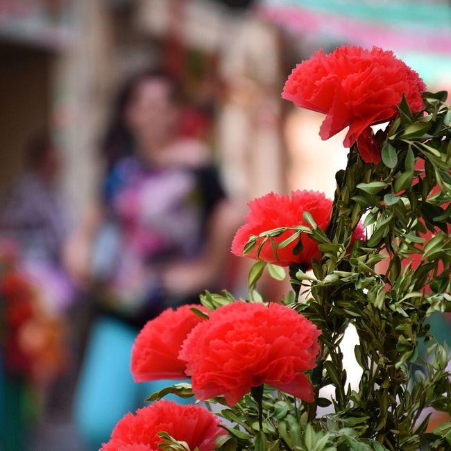 ENRAMADES DE SALLENT Somosfelices Tradition Culture Catalunya Sallent Enramades Details