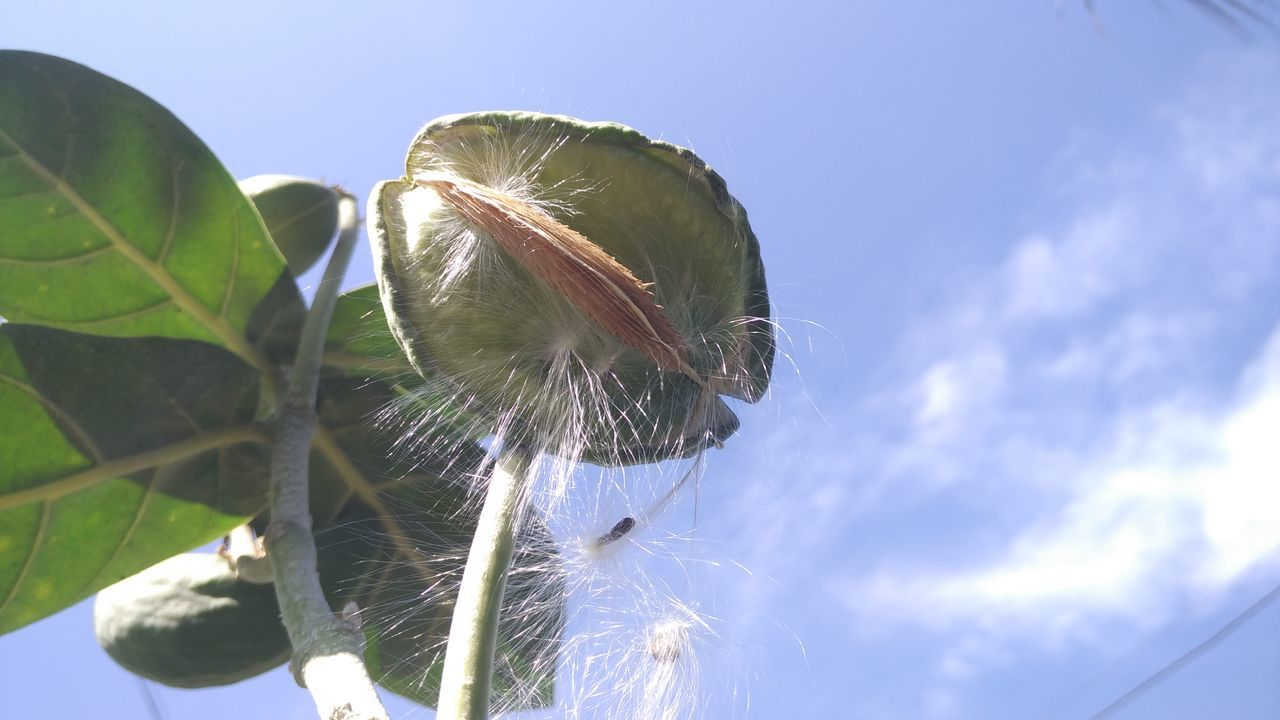 sky, day, outdoors, close-up, low angle view, plant, blue, nature, one person, beauty in nature