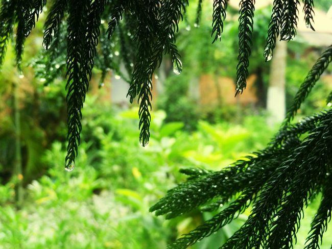 Murti EnjoyingRainAfterLongDays Relief In The Forest Green Green Green!  Waterdroplets Travel