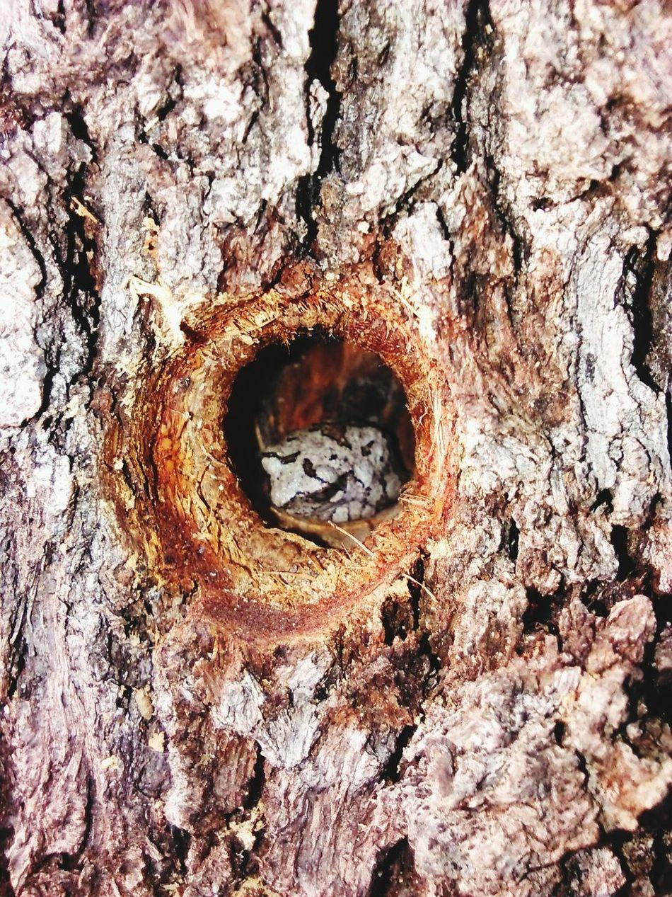 Tree Frog in the Woodpeckerholes