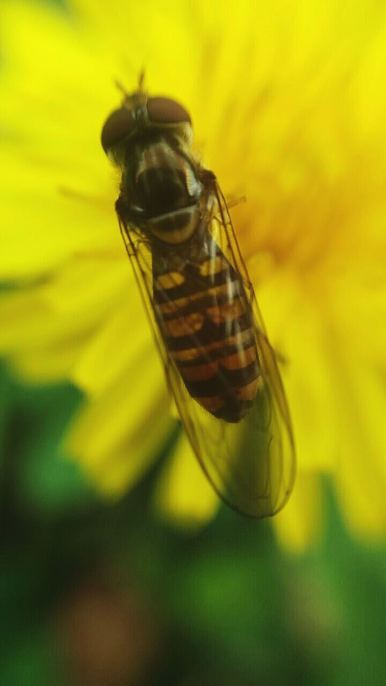 Insect Bee Yellow Flower Nature Day Natural Beauty Talking Photo Zoom Beautiful Nature Beauty In Nature Flower