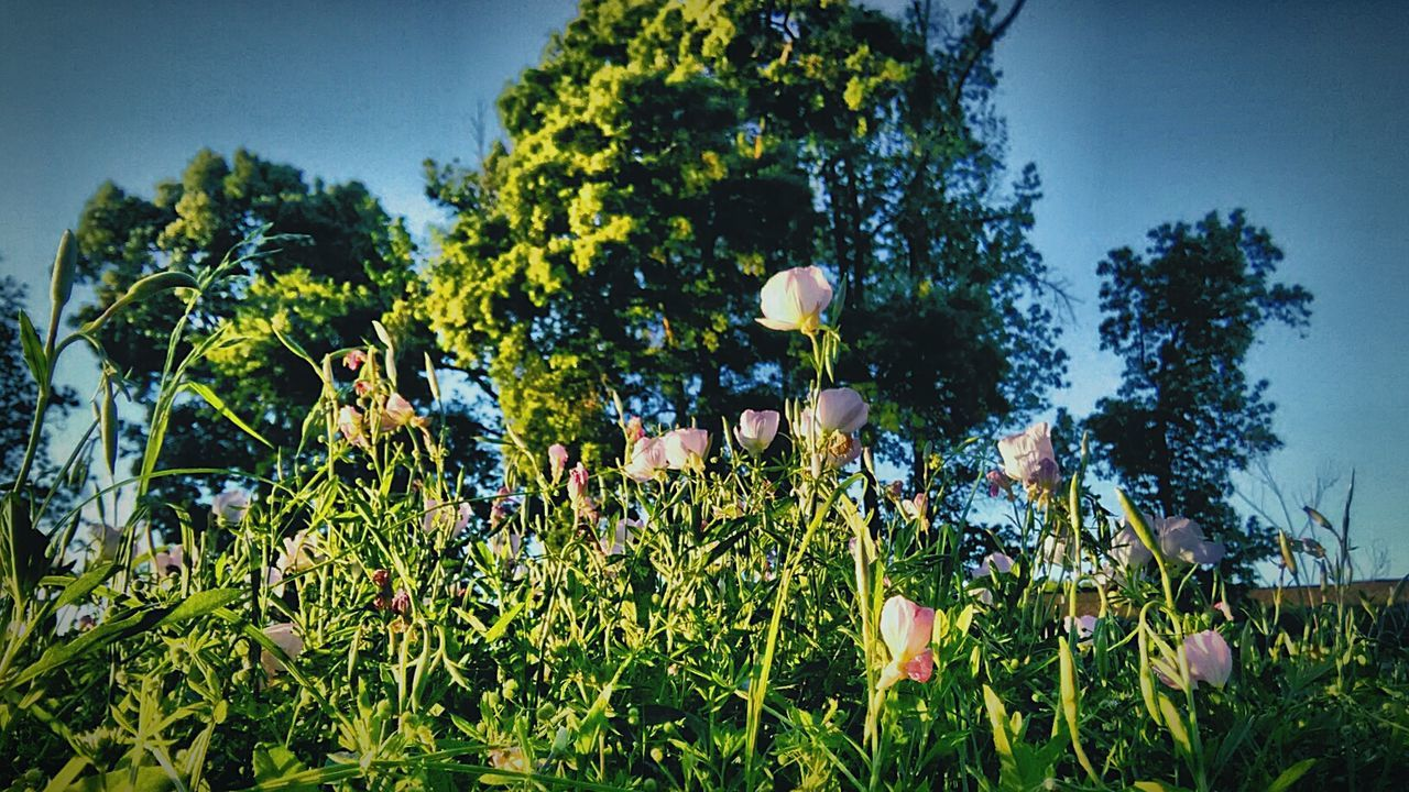 growth, tree, plant, nature, leaf, no people, day, outdoors, low angle view, beauty in nature, sky, fragility, freshness, flower, close-up