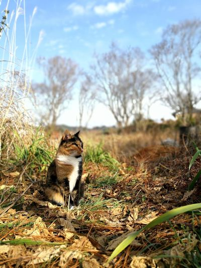 Cute Lovely Cat Lover Cat Sunlight Cat Lovers Calico Cat Winter Trees One Animal Domestic Cat Animal Themes Feline Animal Mammal Pets Day No People Grass Outdoors Nature Sky