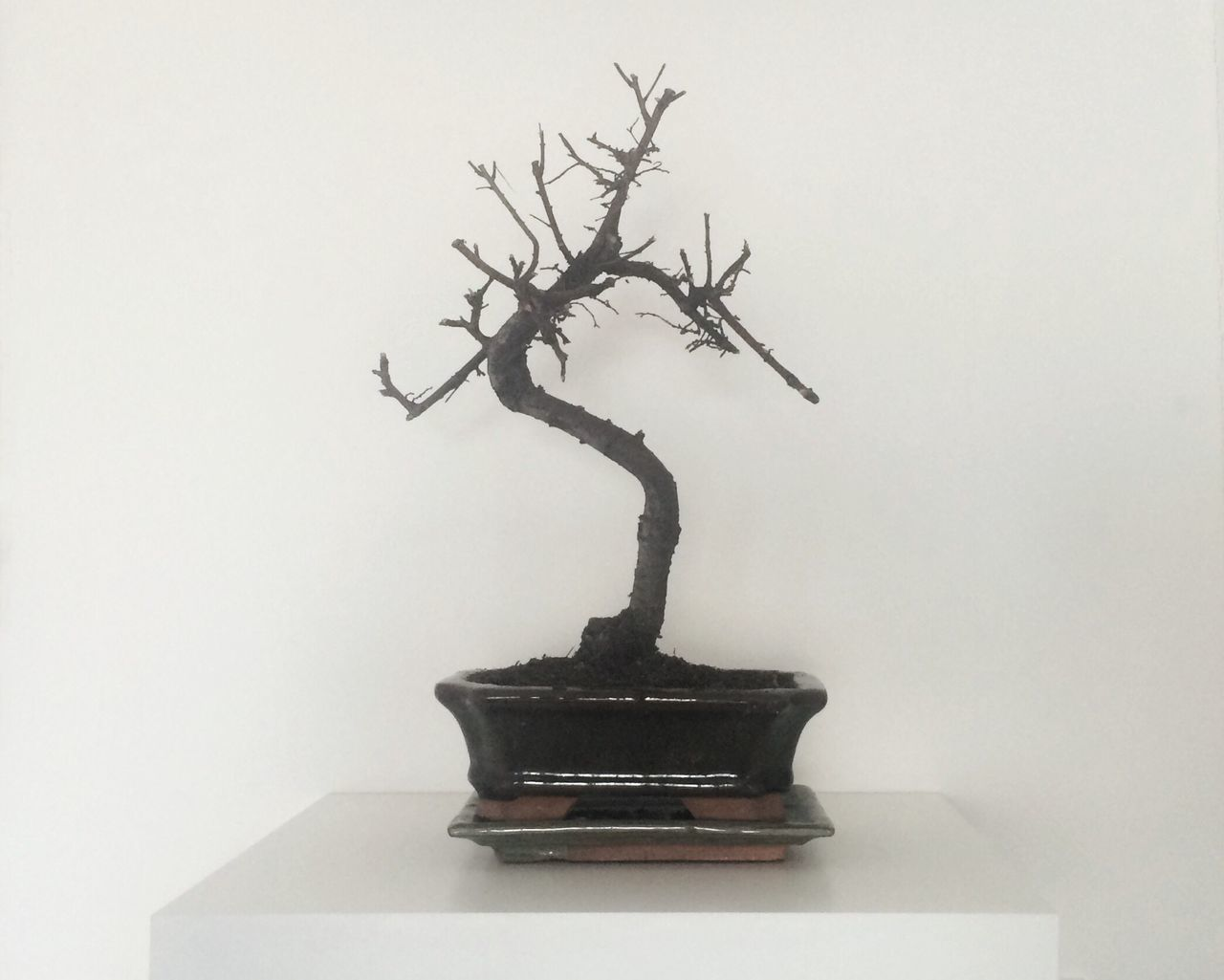 Growth Table Tree No People Bonsai Mindfulness Calm Chill Indoors  Decoration Plant Oxygen Japanese  Miniature Zen Garden B&w Home Seasons Deep Natural