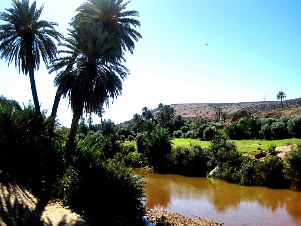 Palm Tree Water Clear Sky Outdoors Souss Tiznit No People Agadir Morocco Marruecos Morocco Souss-masa-draa