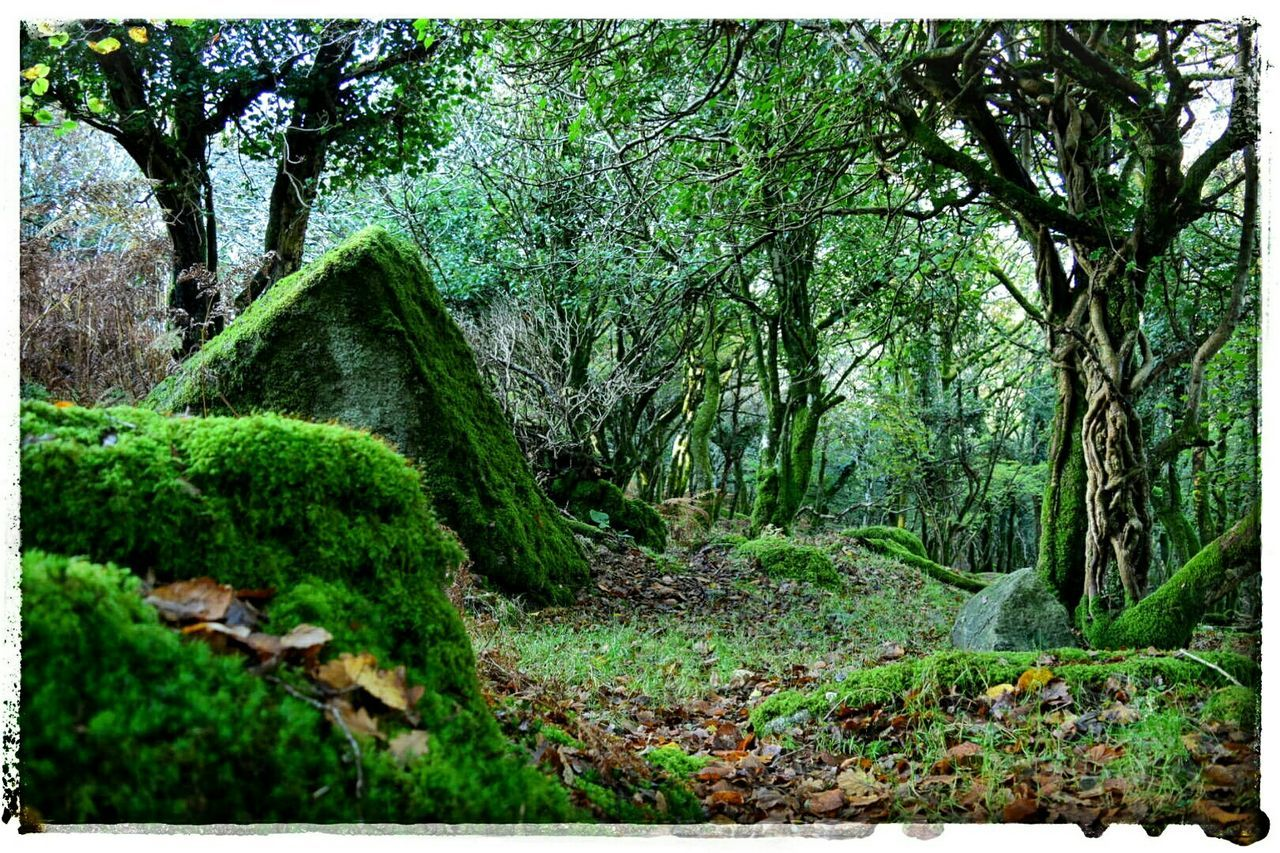 Lush Green Wood Lush Green Wood Green Green Green!  Green ColorGreen Wood Moss-covered Moss In The Woods Into The Woods Walking In The Woods Fairy Wood Fairy Woods Landscapes With WhiteWall Here Belongs To Me