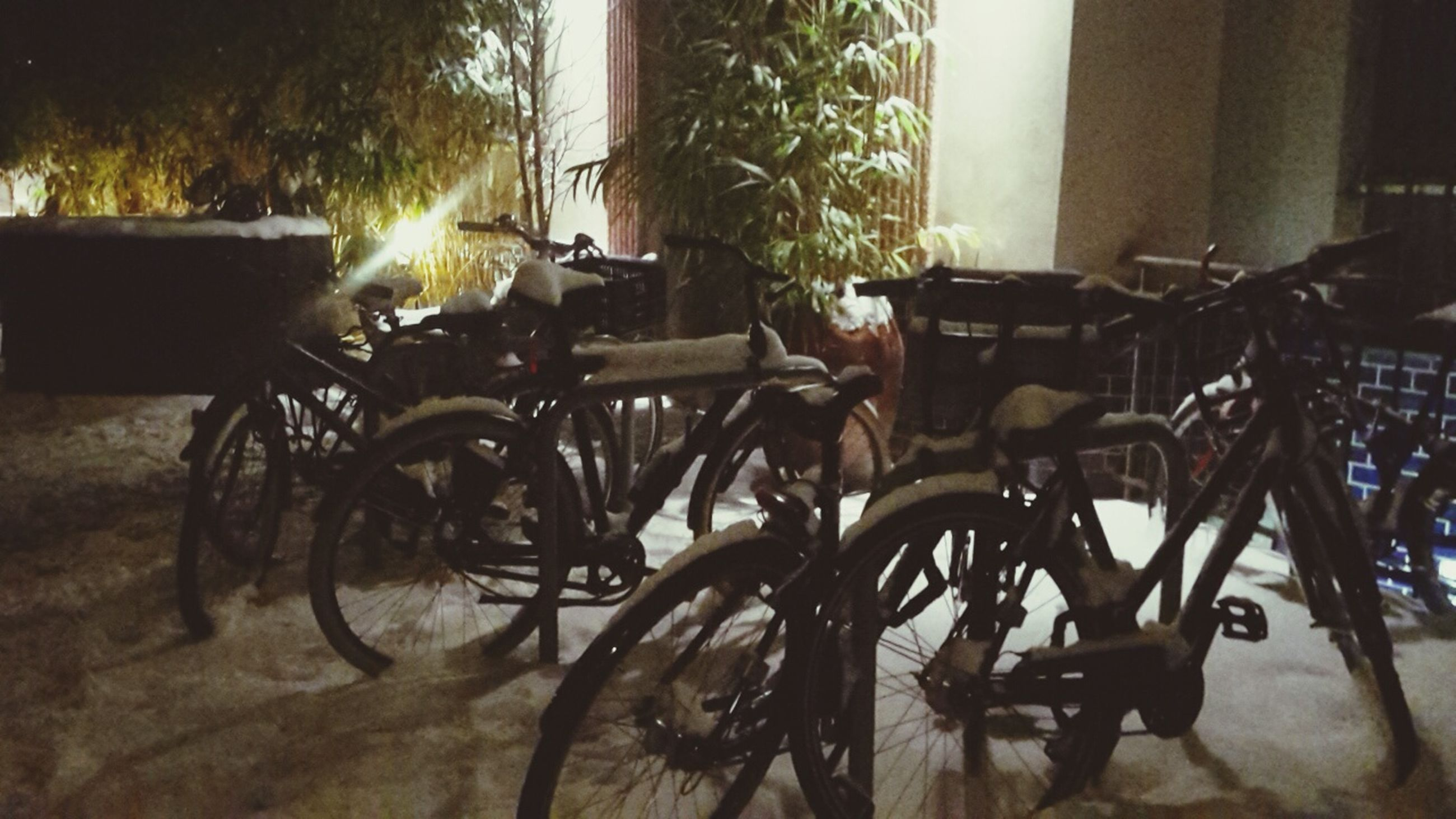 bicycle, land vehicle, mode of transport, transportation, stationary, parked, parking, tree, sunlight, built structure, shadow, architecture, absence, day, outdoors, no people, building exterior, chair, house, parking lot
