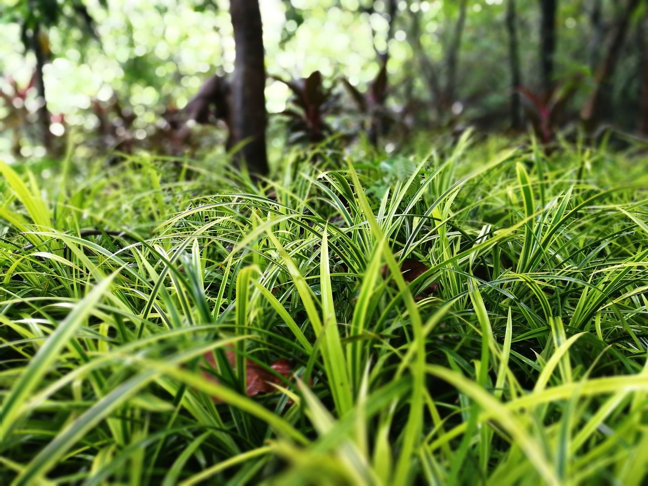 Close, fresh and sharp! Grass Close-up Freshness Green Color Outdoors Beauty In Nature Nature