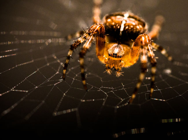 Kreuzspinne Animal Markings Beauty In Nature Close-up Complexity Fine Art Photography Focus On Foreground Fragility Illuminated Kreuzspinne Lumixgx8 Macro Macro Photography Natural Pattern Nature No People Outdoors Selective Focus Spider Spider Web Spinne Spinnennetz Web Showcase July