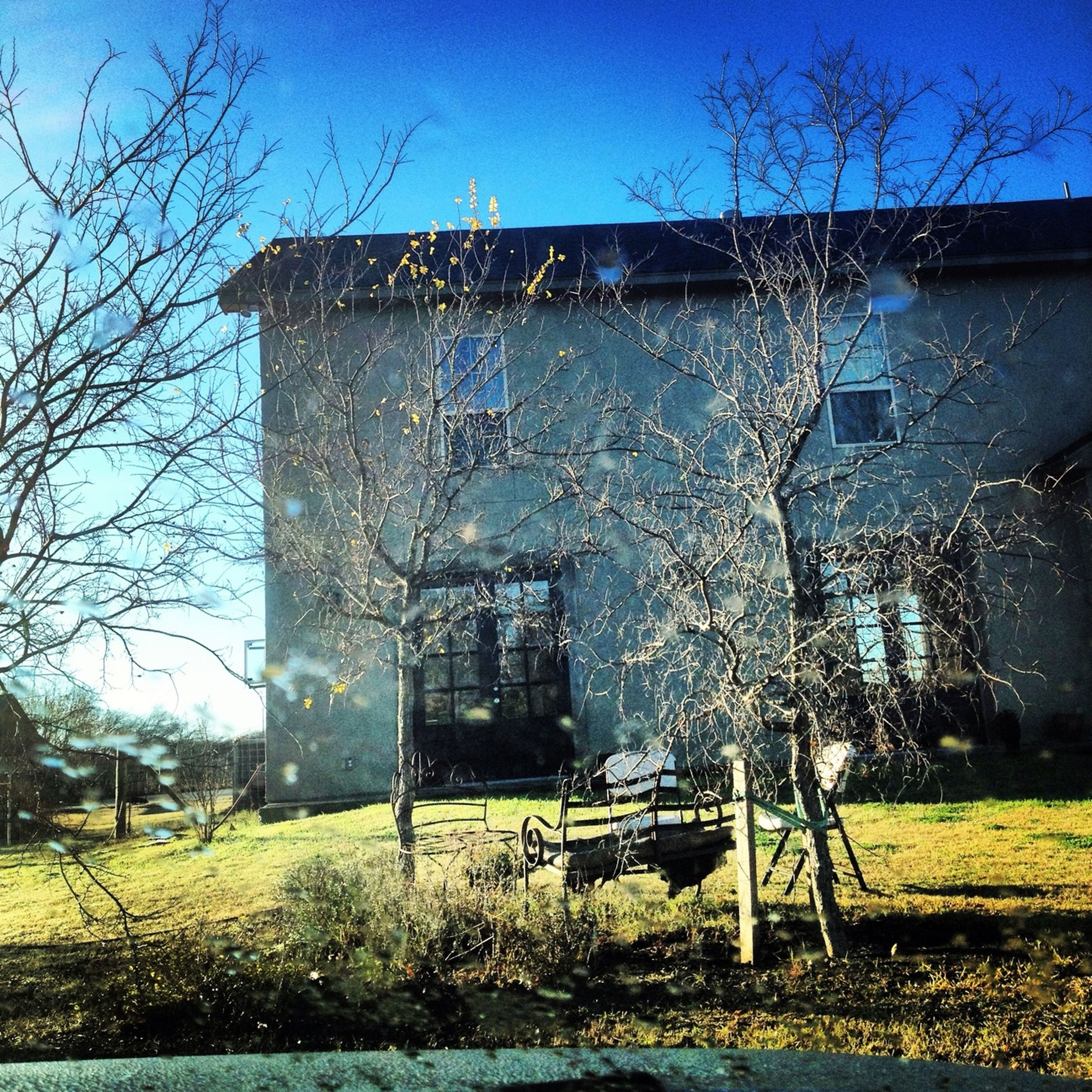 building exterior, architecture, built structure, tree, grass, bare tree, clear sky, blue, abandoned, lawn, house, day, field, sunlight, growth, window, branch, building, sky, old