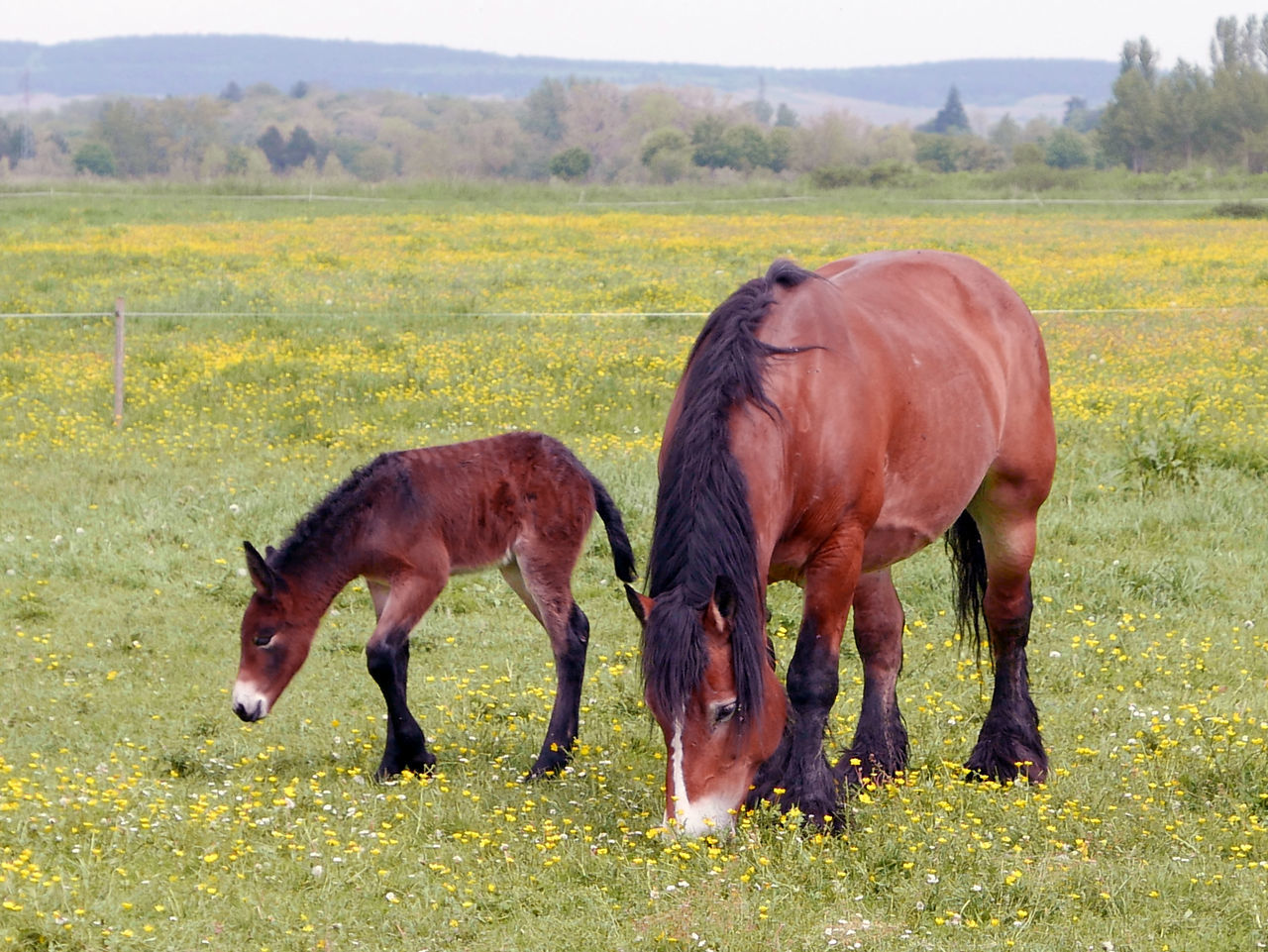 Beauty In Nature Brown Day Domestic Animals Field Grass Grassy Grazing Green Color Growth Herbivorous Landscape Livestock Mammal Nature No People Outdoors Pasture Rural Scene Animal Tranquil Scene Tranquility Foal Baby Horse Mother And Child