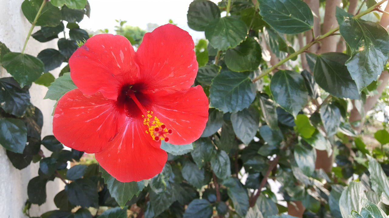red flower in focus 2 Beauty In Nature Blooming Close-up Day Flower Flower Head Fragility Freshness Growth Leaf Nature No People Outdoors Petal Plant Red Water