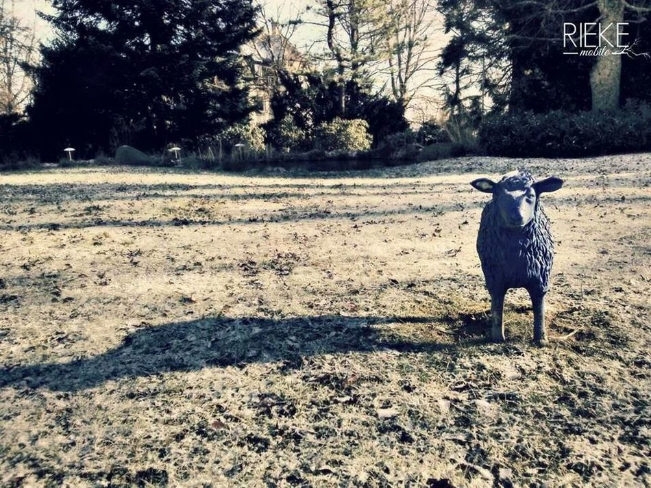 blue sheep in Freudenstadt Winter White By CanvasPop AMPt_community Creative Living By DW