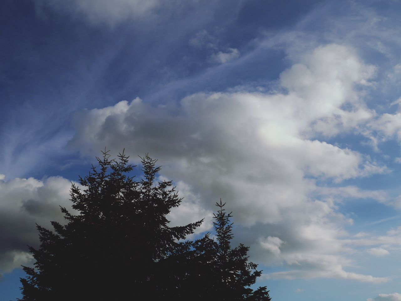cloud - sky, sky, tree, low angle view, nature, beauty in nature, day, no people, outdoors, growth, tranquility, scenics