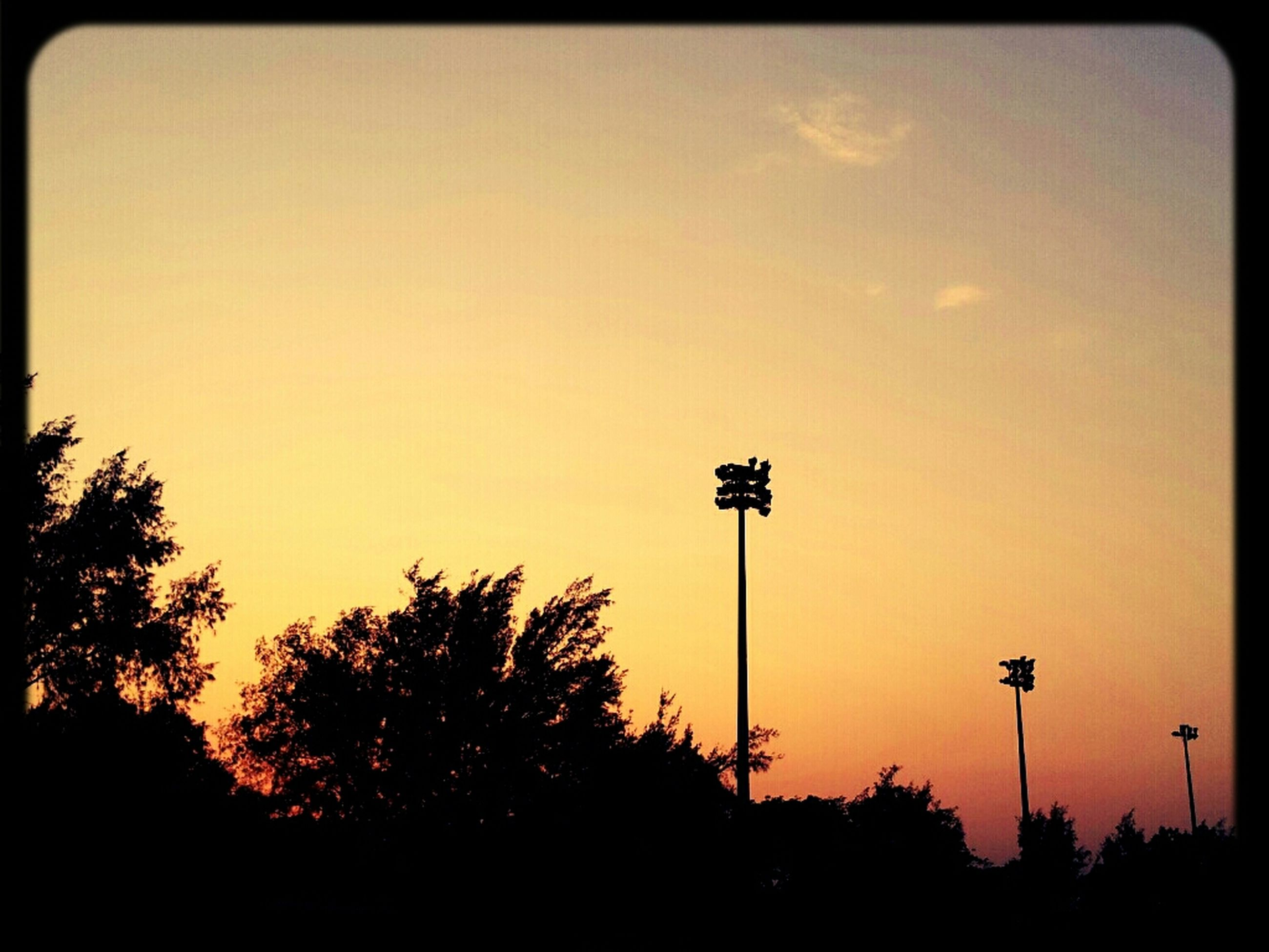silhouette, low angle view, tree, street light, transfer print, sky, sunset, clear sky, copy space, auto post production filter, dusk, nature, outdoors, tranquility, beauty in nature, blue, no people, lighting equipment, outline, scenics