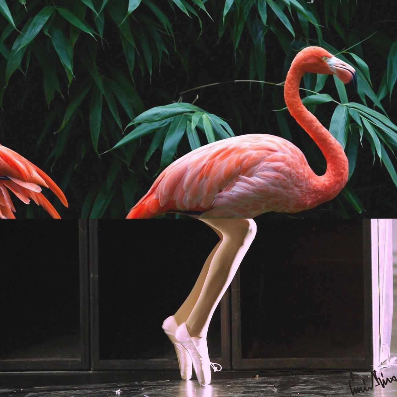 Dancer Flamant Rose