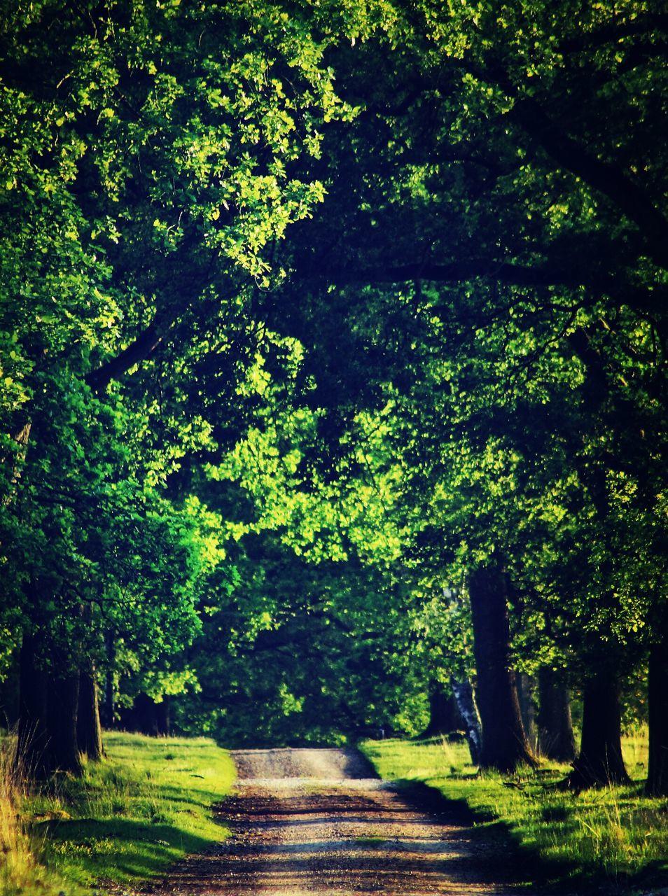 Empty Street Amidst Trees On Sunny Day