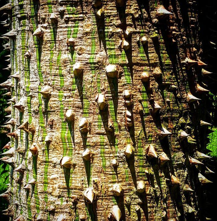 Travelblog Nature Nature Photography Tree Descubrecostarica Beauty In Nature Costa Rica Y Su Naturaleza In The Jungle Adventure Greenery Evolution  Protection