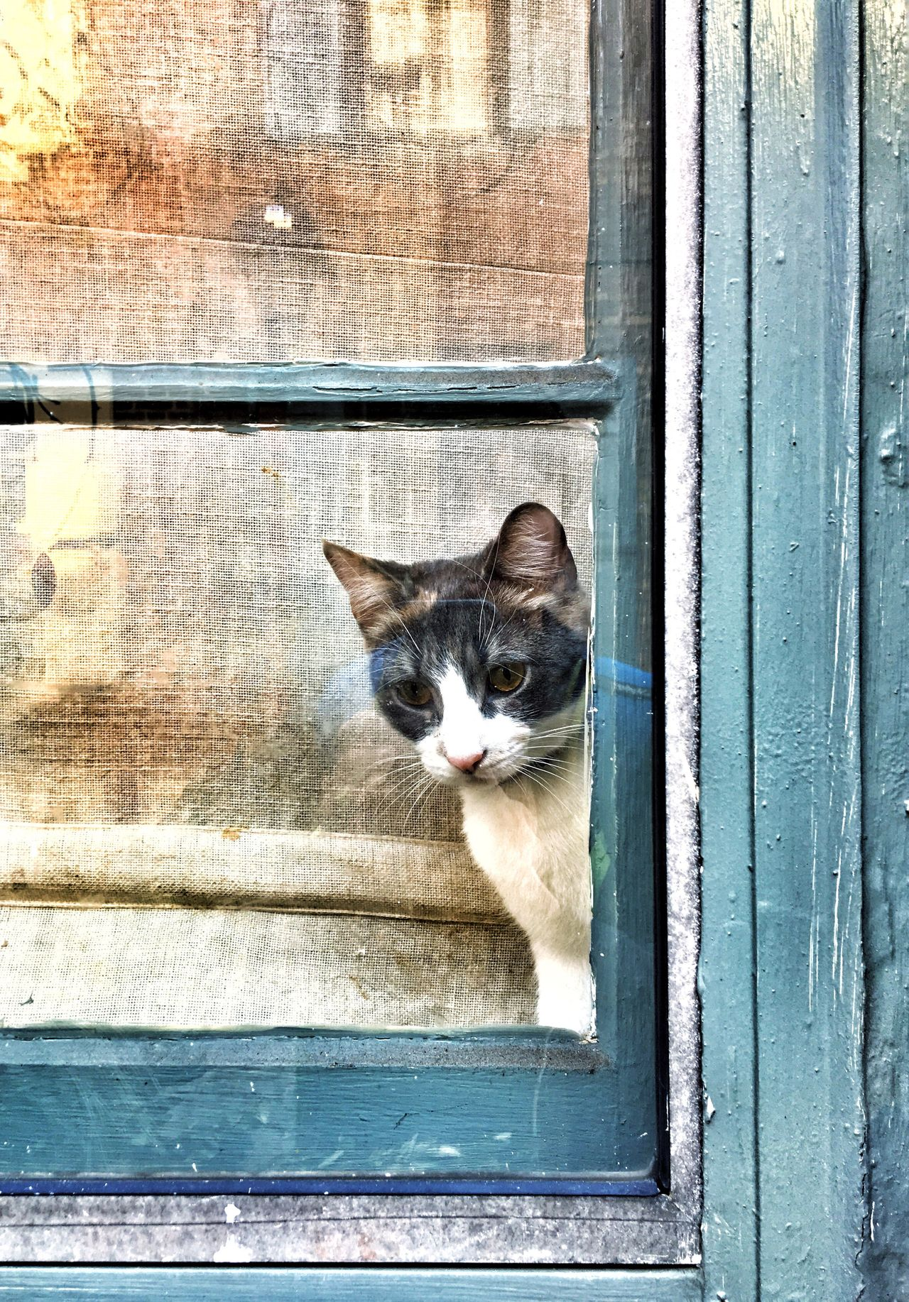 Domestic Cat Pets Domestic Animals Mammal Animal Themes Feline No People One Animal Outdoors Building Exterior Portrait Day Close-up Sliding Door