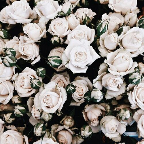 •//The day that had left may was your turn to make youself however you like.//•❤👽✌🍃🍂🌿🌹🌹🌺🌸Flower Freshness Rose - Flower Beauty In Nature Petal Nature Rosé Bouquet Botany Growth Bunch Of Flowers Flower Head White Softness First Eyeem Photo Beauty In Nature Environment Nature Day