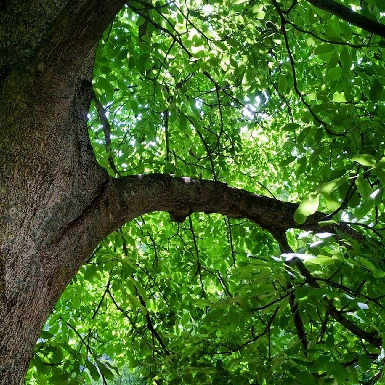 Tree Faido