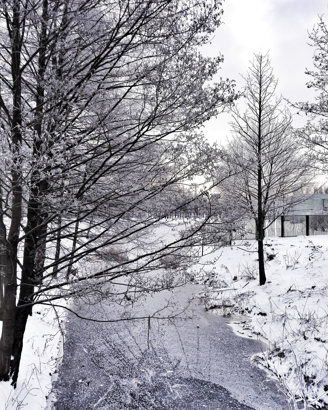 Hello World Enjoying Life City Weather Cold Temperature Snow Bare Tree Day Winter Beauty In Nature Nature Tree Cityscape Standing Water Tranquility Black And White Water_collection Water