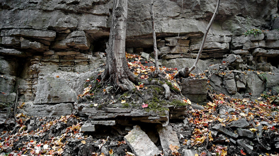 Beauty In Nature Day Fall Leaves Nature Outdoors Ruins Stones Tree Trunk