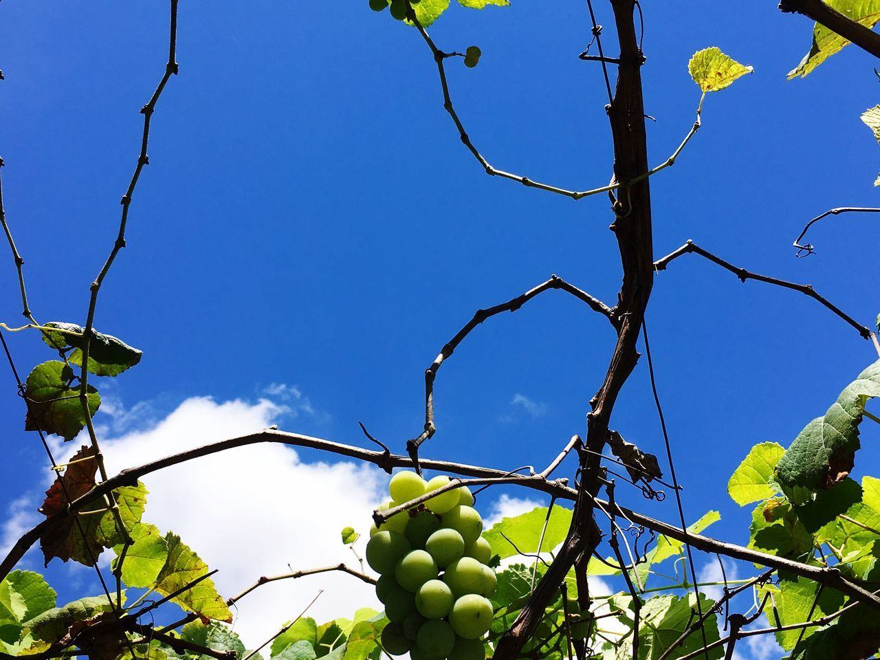 Low Angle View Growth Nature Clear Sky Branch No People Leaf Tree Outdoors Beauty In Nature Close-up Day Sky