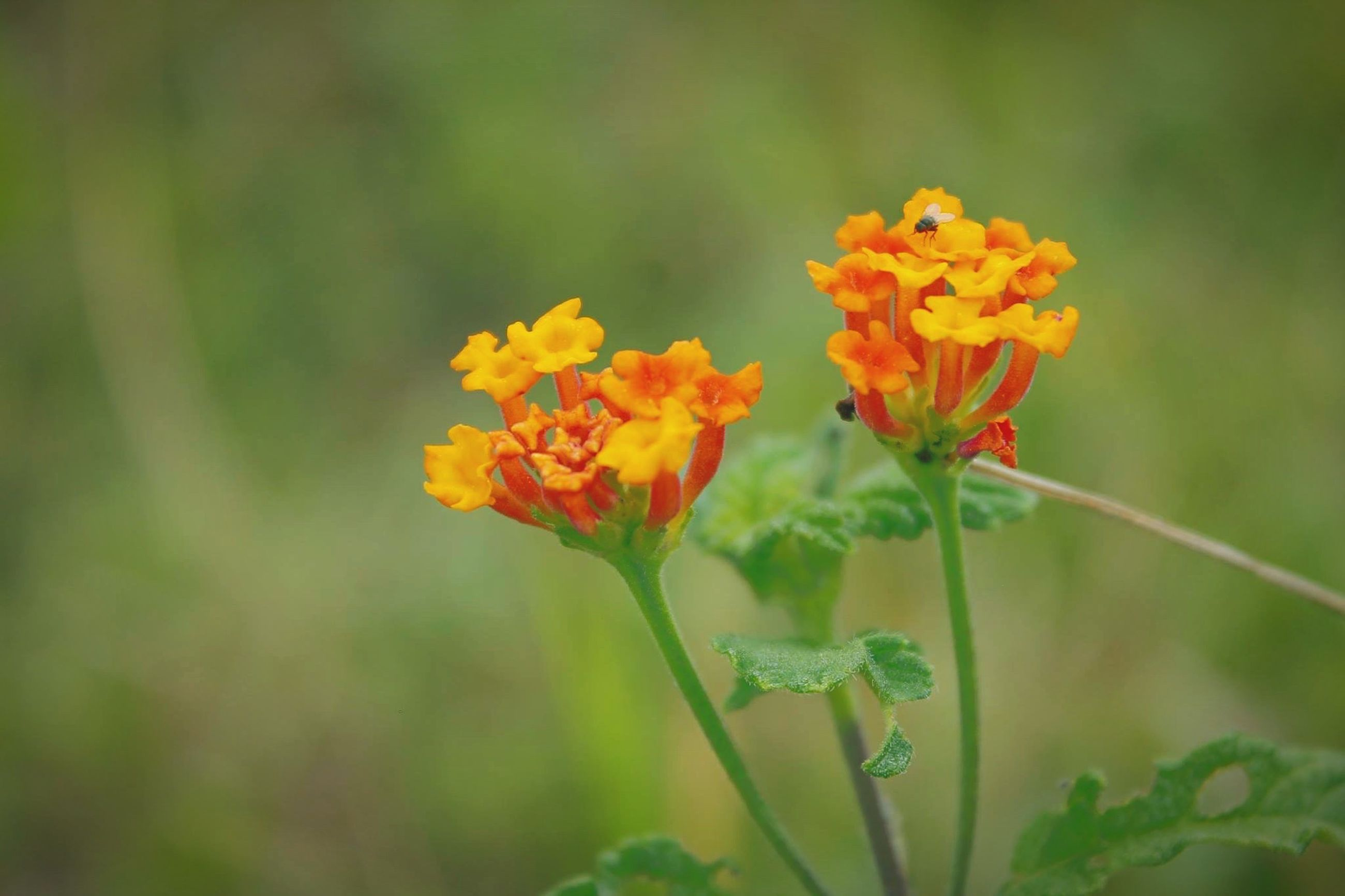 flower, petal, freshness, fragility, growth, flower head, focus on foreground, yellow, beauty in nature, blooming, close-up, plant, nature, stem, orange color, in bloom, selective focus, field, blossom, day