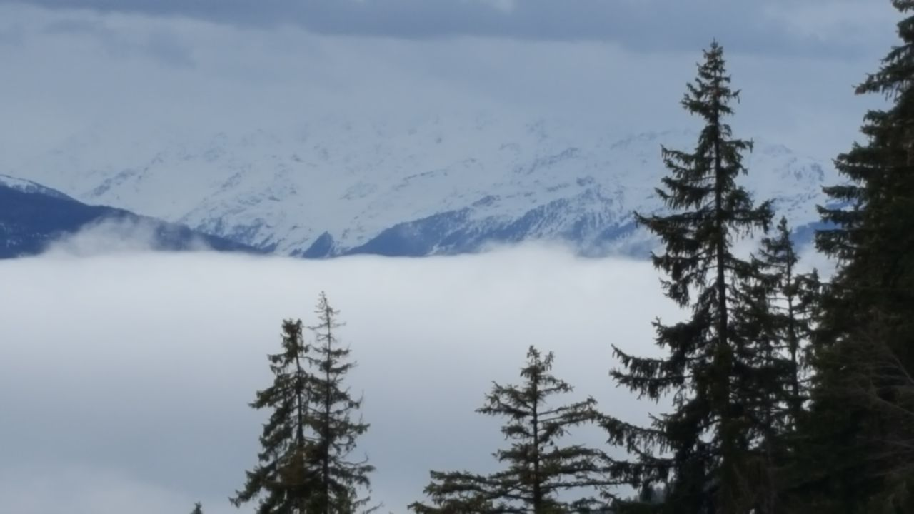 Mountain Tree Nature Landscape