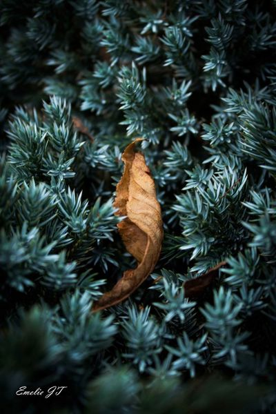A lonely leaf Sweden EyeEm Nature Lover Eyem Nature Lovers  Nature