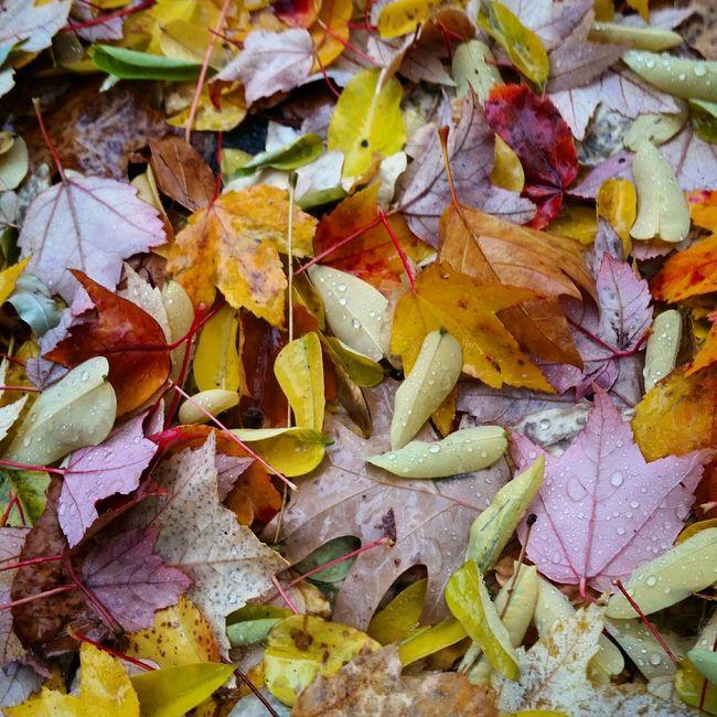Yale University Walking Photographer EyeEm Best Shots Fall Beauty Nature Photography Nature_collection
