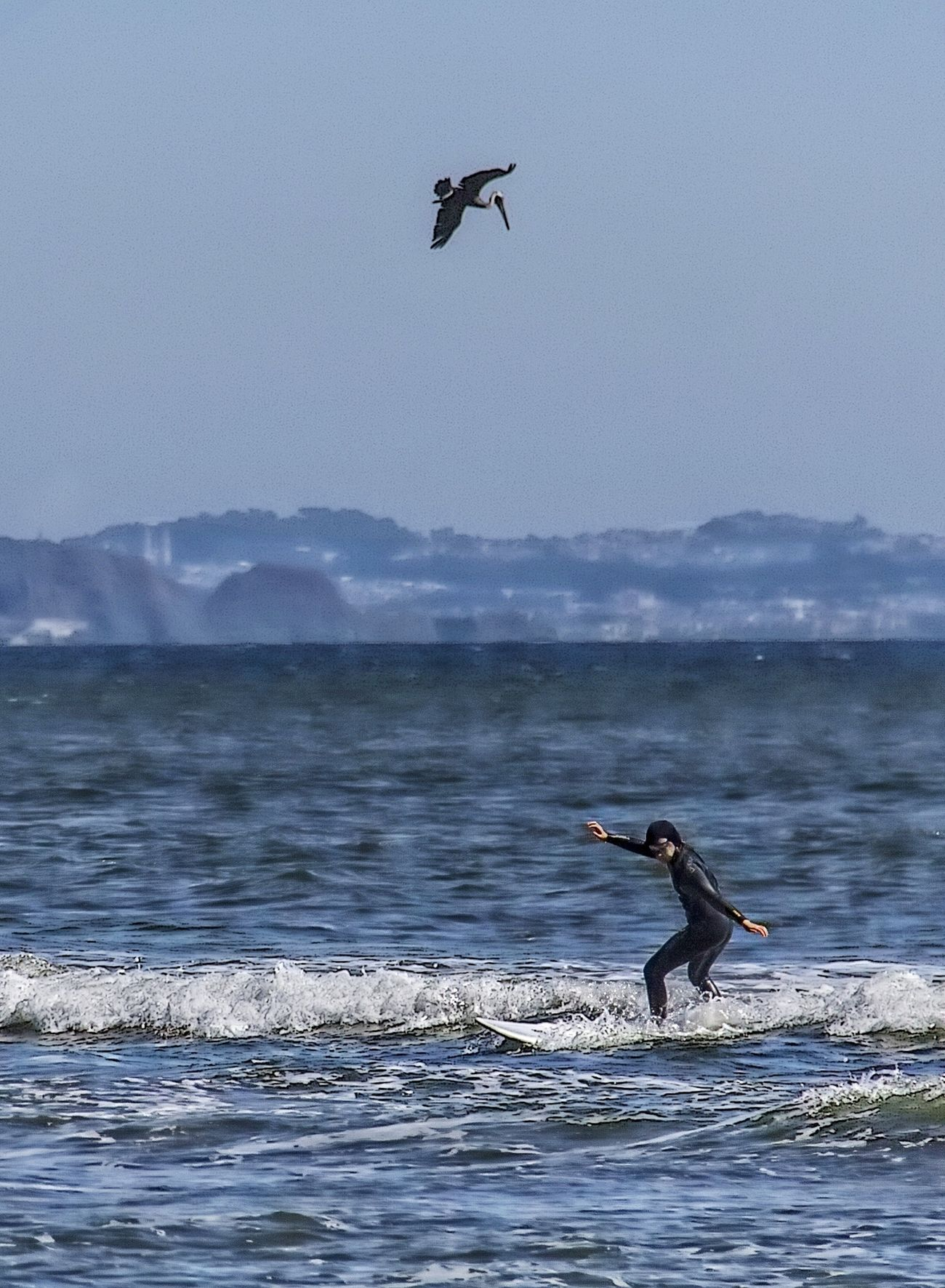 Bird watcher. Water_collection Eye4photography  Surfin' Ocean