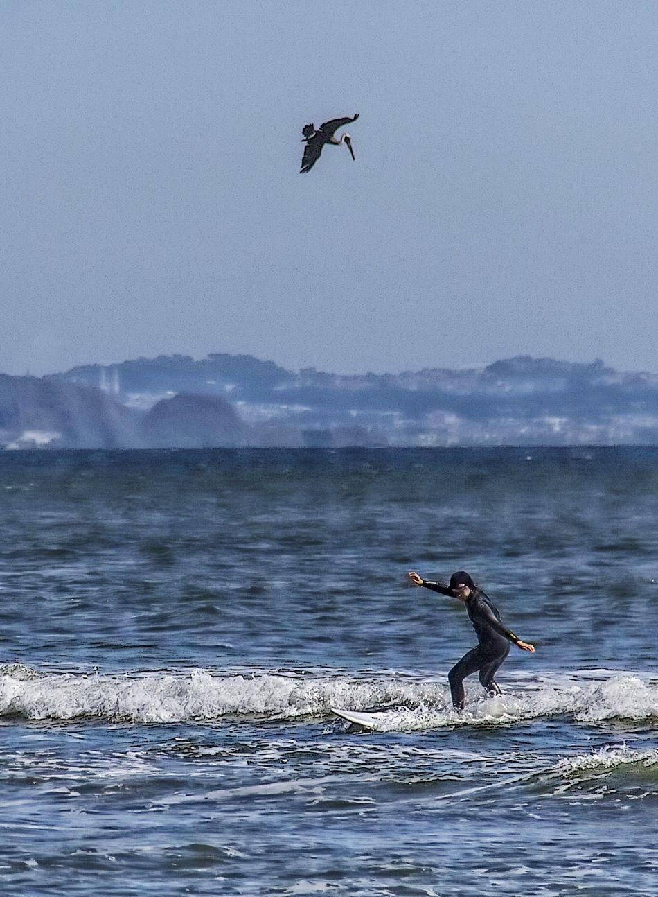 Bird watcher. Water_collection Eye4photography  Surfin' Ocean