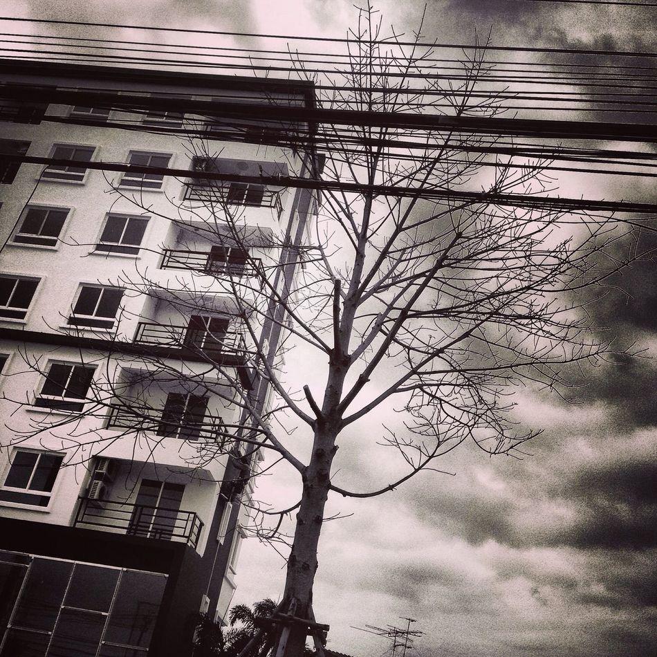 Creepy Tree Creepy Building Creepy Atmoshpere Creepy House