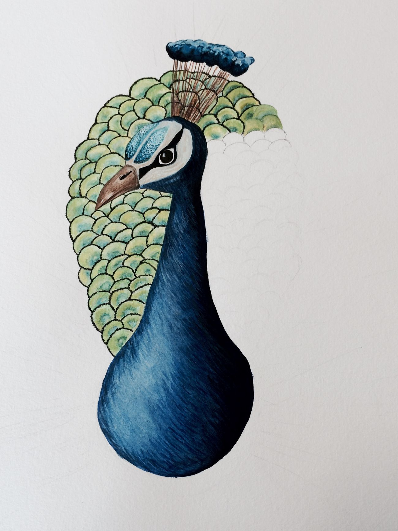 Peacock Painting IB Art
