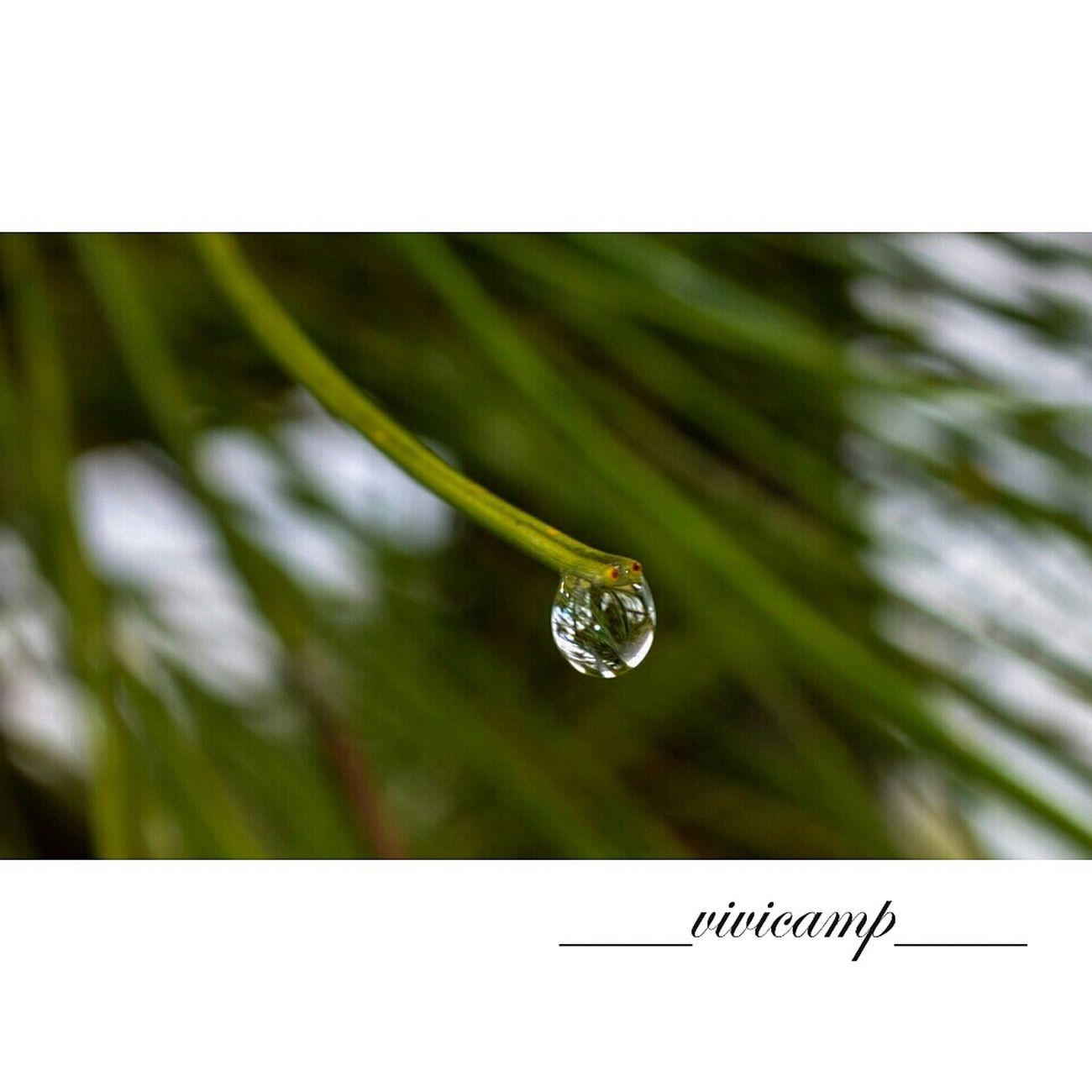 Dias de soledades y silencios... Macro Photography Nature_collection Water_collection Sinfiltros