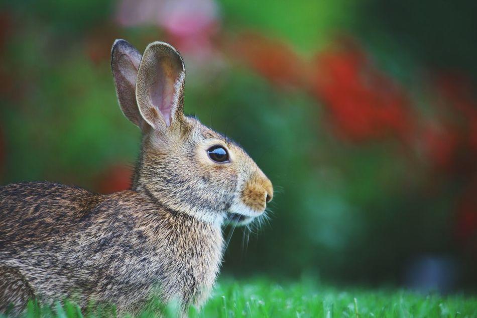 Beautiful stock photos of hasen,  Animal Themes,  Animal Wildlife,  Animals In The Wild,  Brown
