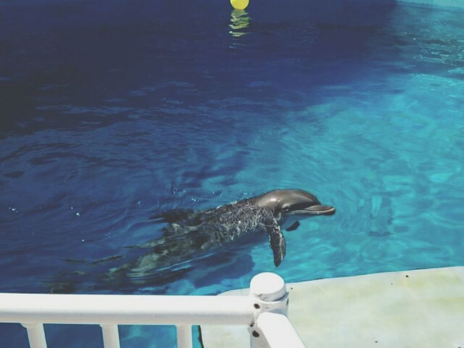 winter!! Dolphin Dolphinetale